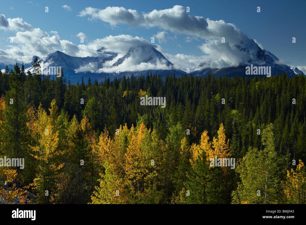 Couleurs d'automne, la Vallée de Maligne, Jasper National Park, Alberta, Canada Photo Stock