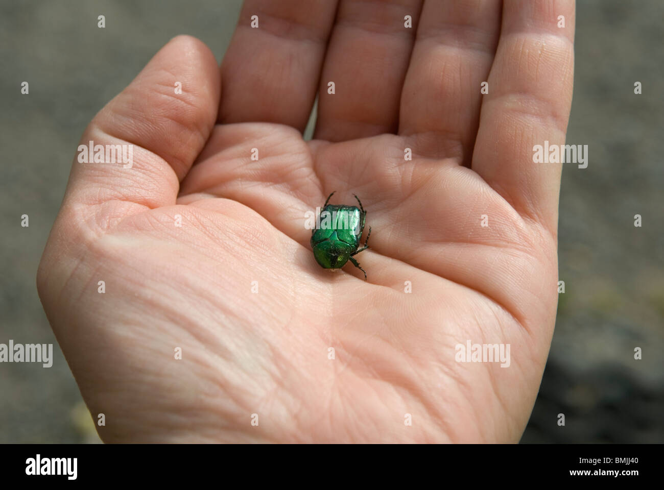 Human hand holding beetle, close-up Photo Stock