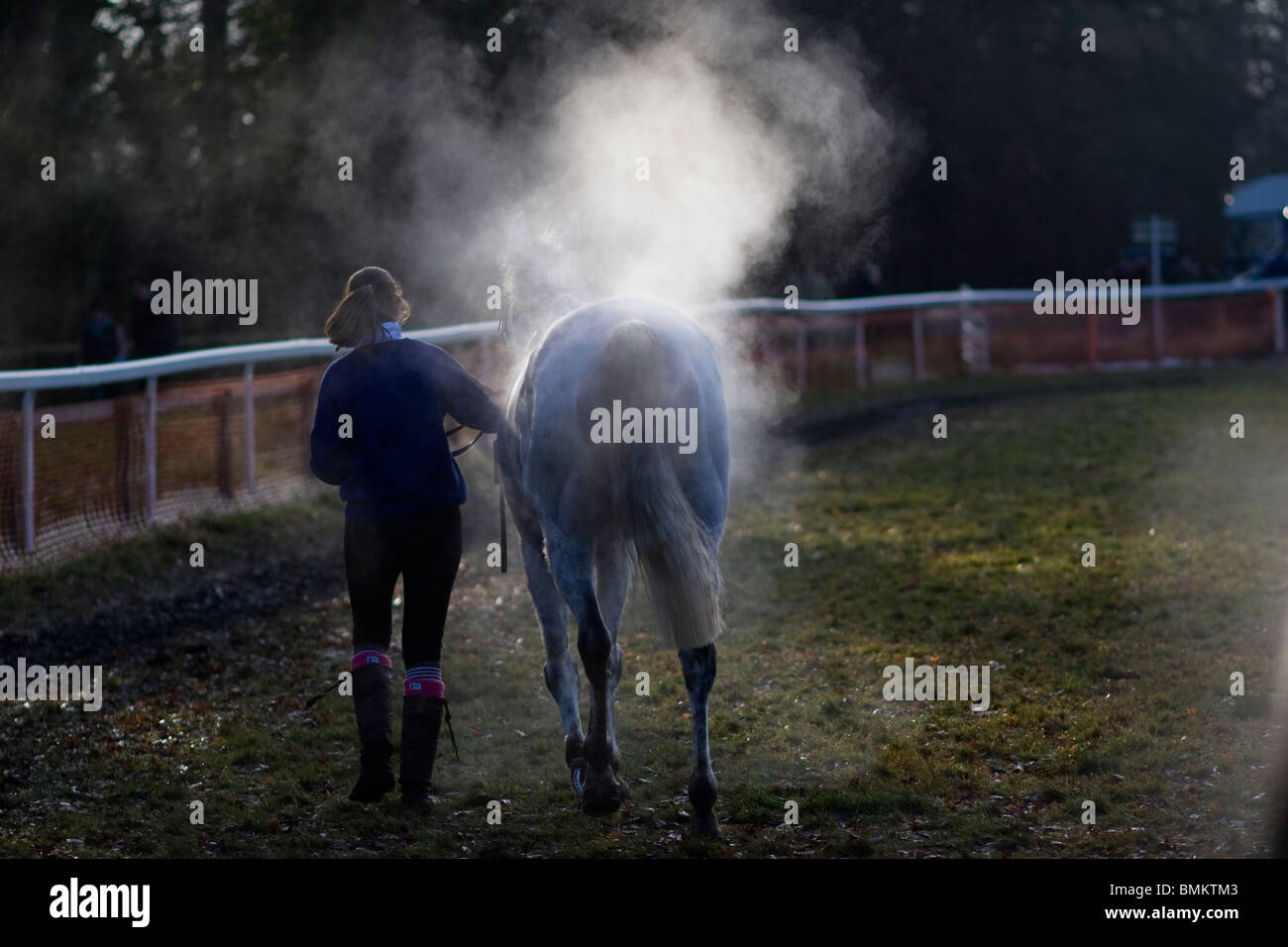 Le cheval de course après le point-à-point courses hippiques à Cottenham dans Cambridgeshire Photo Stock