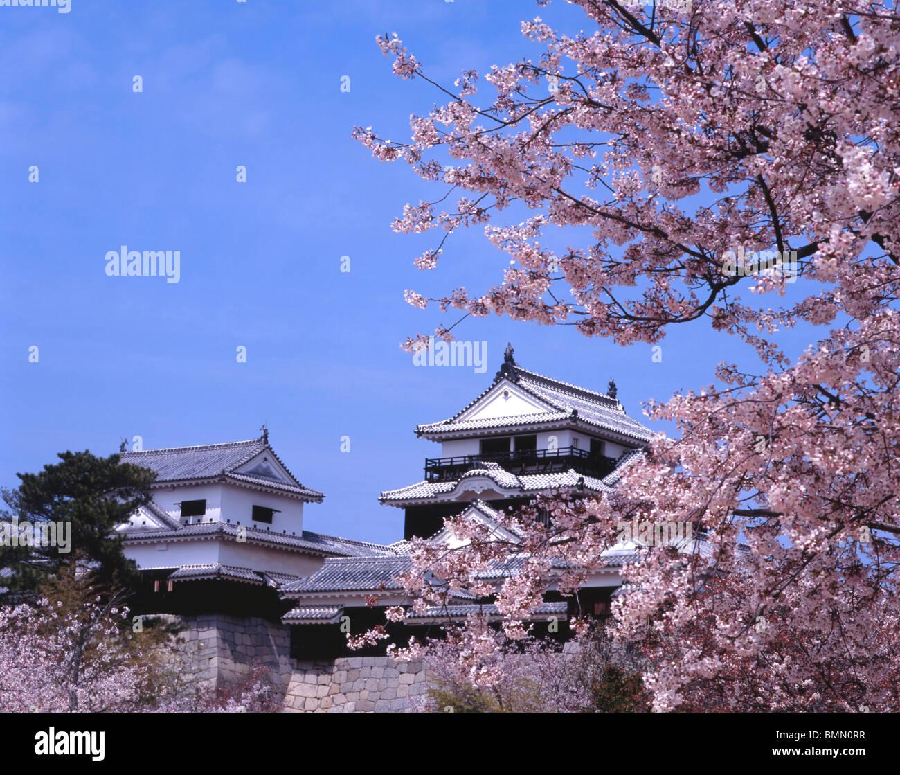 Matsuyama Castle et Fleur de cerisier, Ehime, Shikoku, Japon Photo Stock
