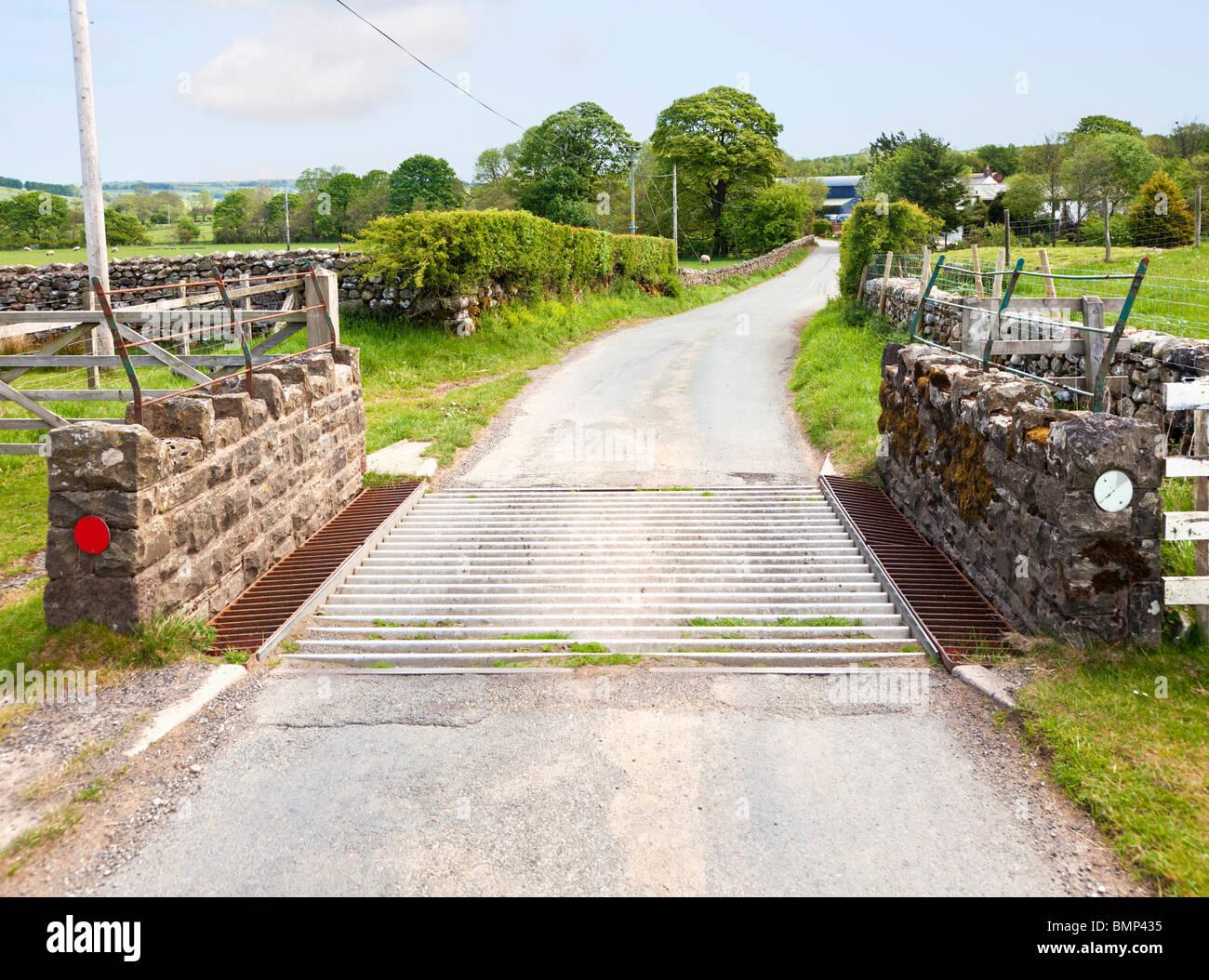Grille des bovins, sur une route de campagne, England, UK Photo Stock
