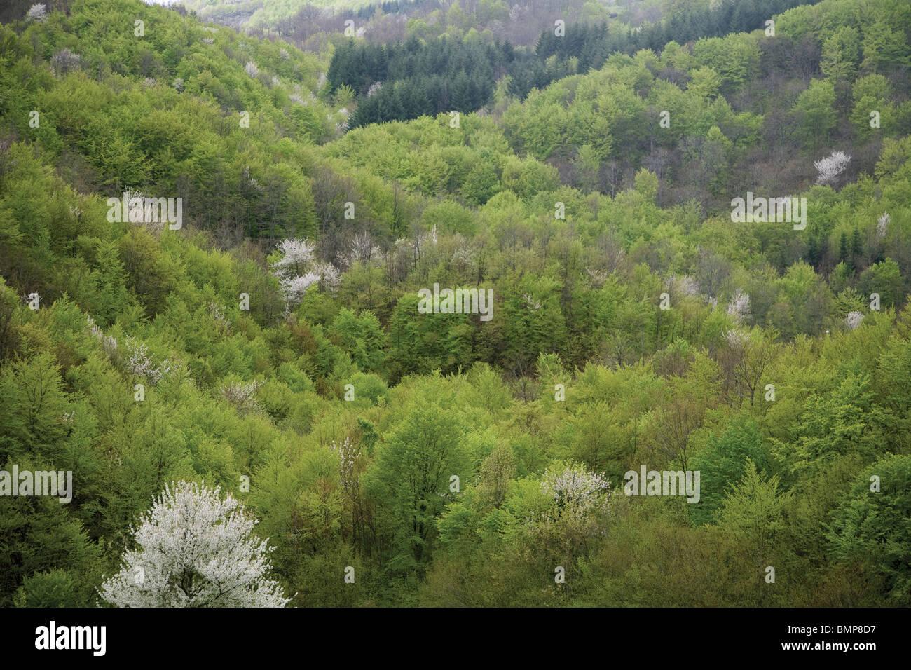 La haute montagne, forêt de feuillus et de conifères, l'Apennin Central, dans le Parc National de Photo Stock