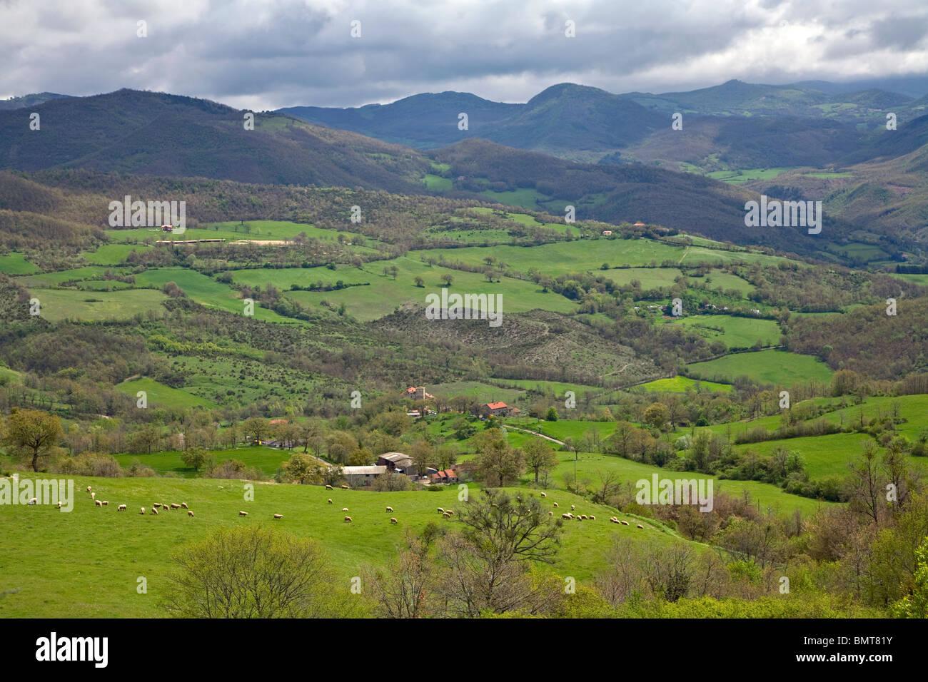 Les moutons broutent les verts pâturages à l'ouest de Pieve Santo Sfefano, dans l'Apennin Central, Photo Stock