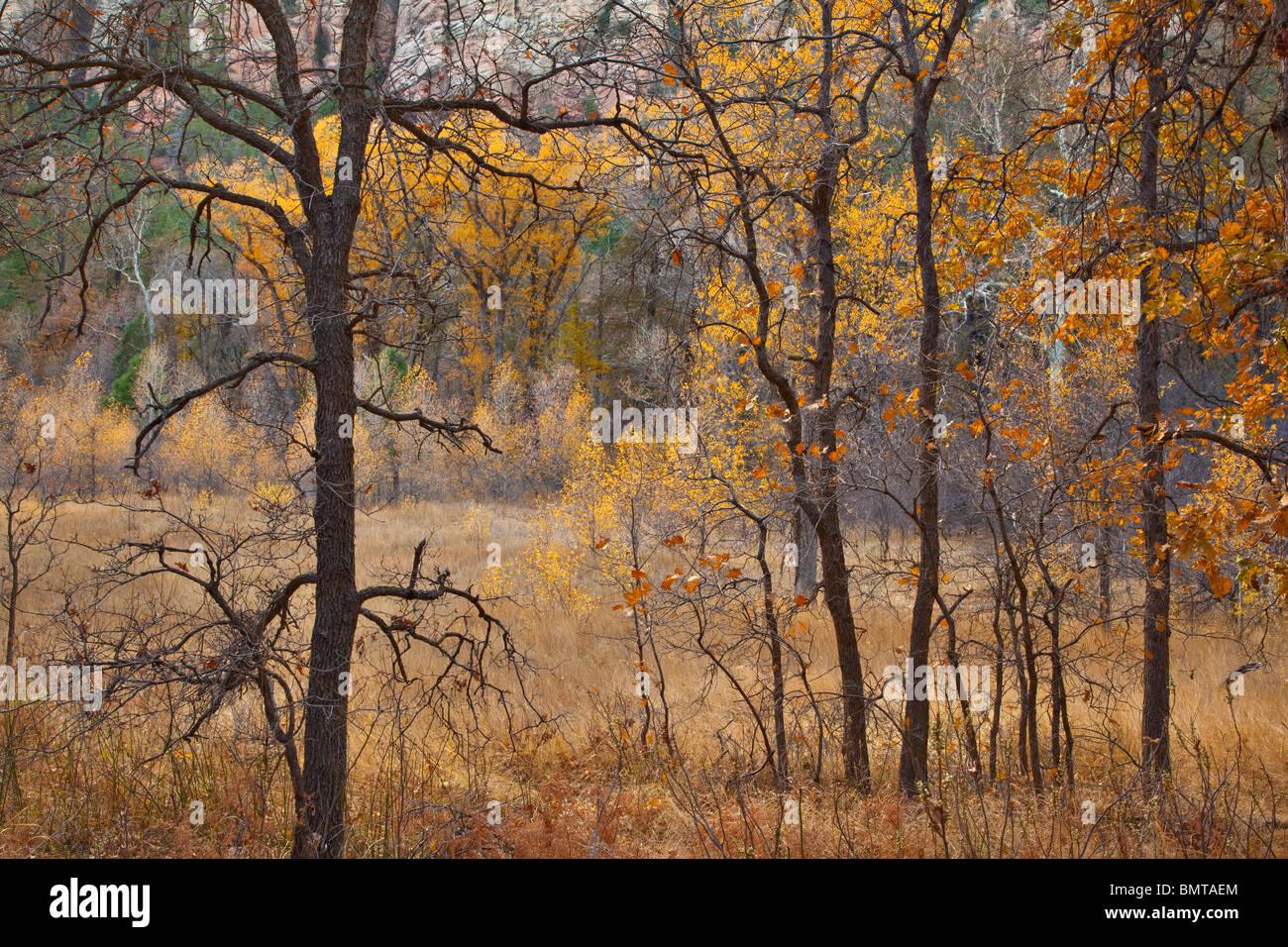 Couleurs d'automne de chênes, de saules et de peupliers en frêne Oak Creek Canyon Coconino National Photo Stock