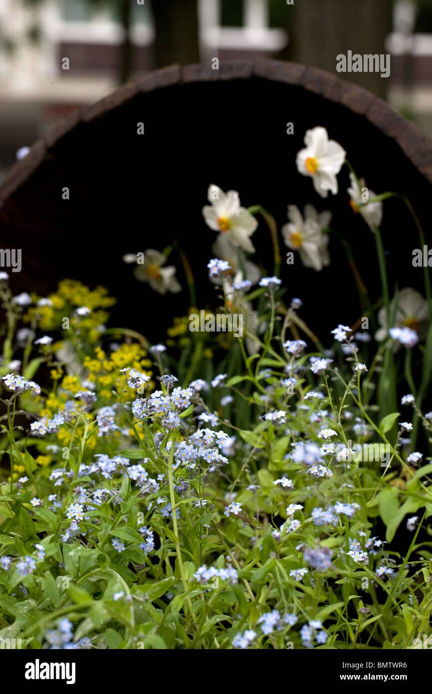 Fleurs, jardinage, loisirs, vert, nature, Photo Stock
