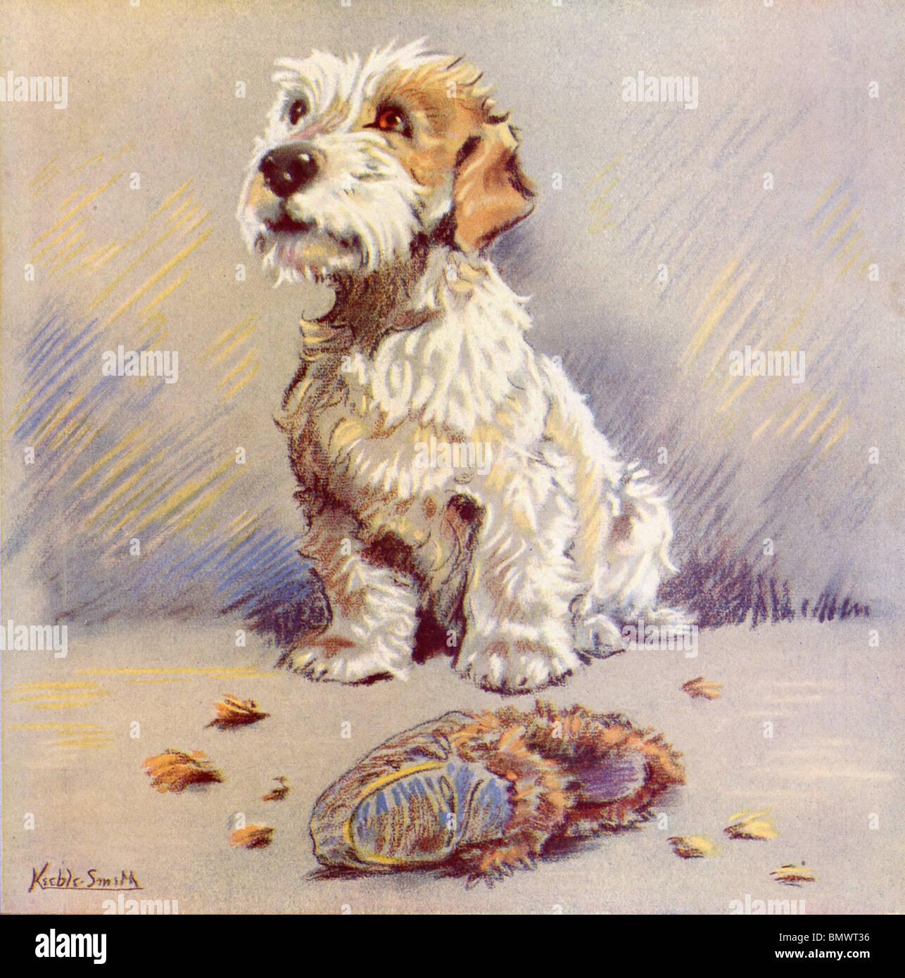 Le petit chien blanc avec de grands yeux marron Photo Stock