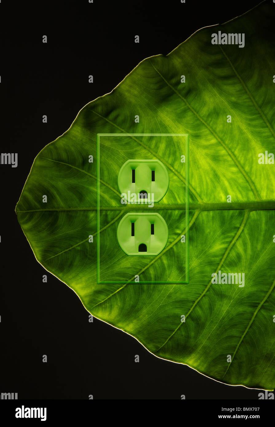 Une plante verte feuille avec une prise d'alimentation électrique Photo Stock