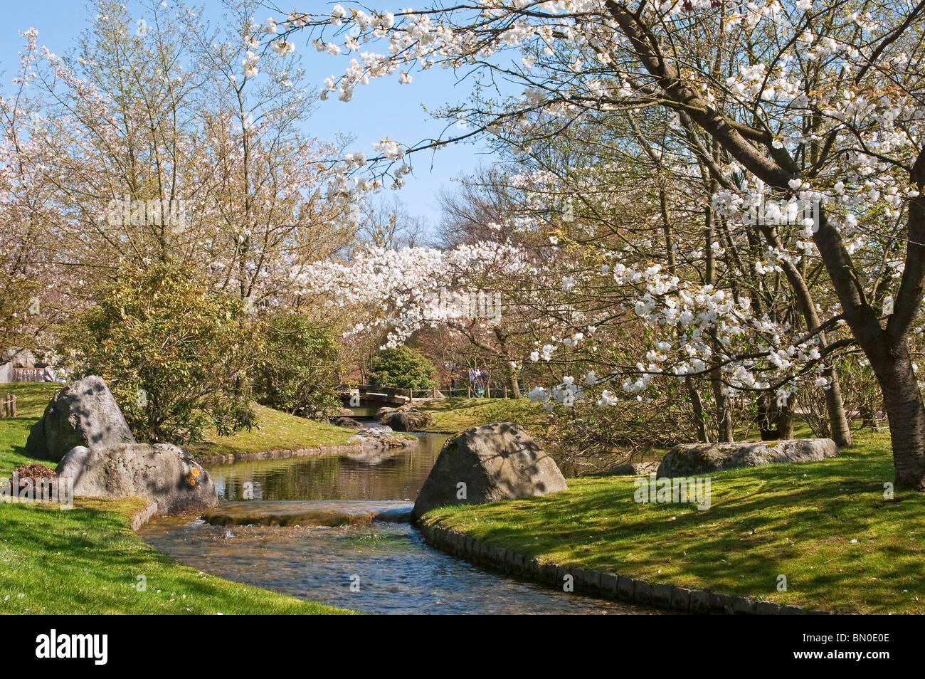 Riviere Et Cherry Tree Blossoming Au Jardin Japonais Hasselt