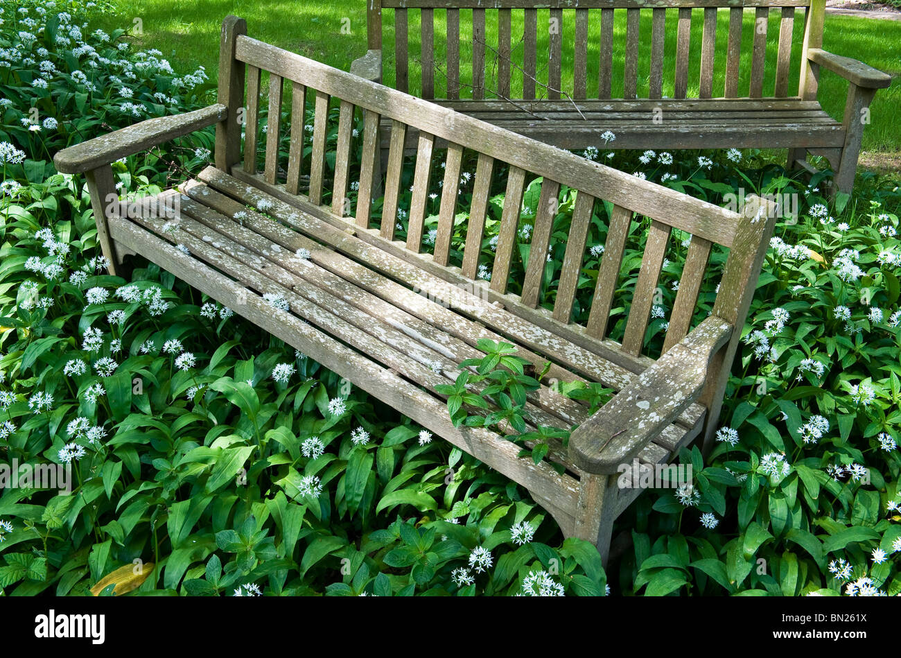 Vieux Banc De Jardin un vieux banc de jardin envahi par l'ail sauvage banque d