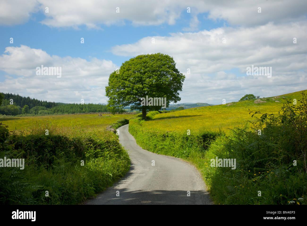 Route de campagne tranquille, Cumbria, Angleterre, Royaume-Uni Photo Stock