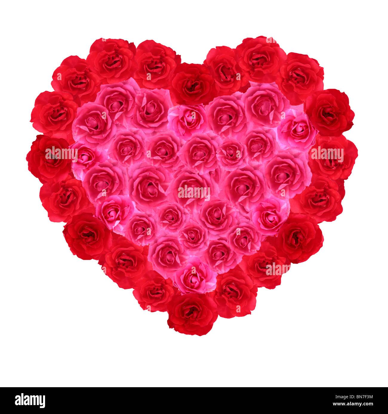 Rose rouge et rose symbole en forme de coeur sur fond blanc Photo Stock