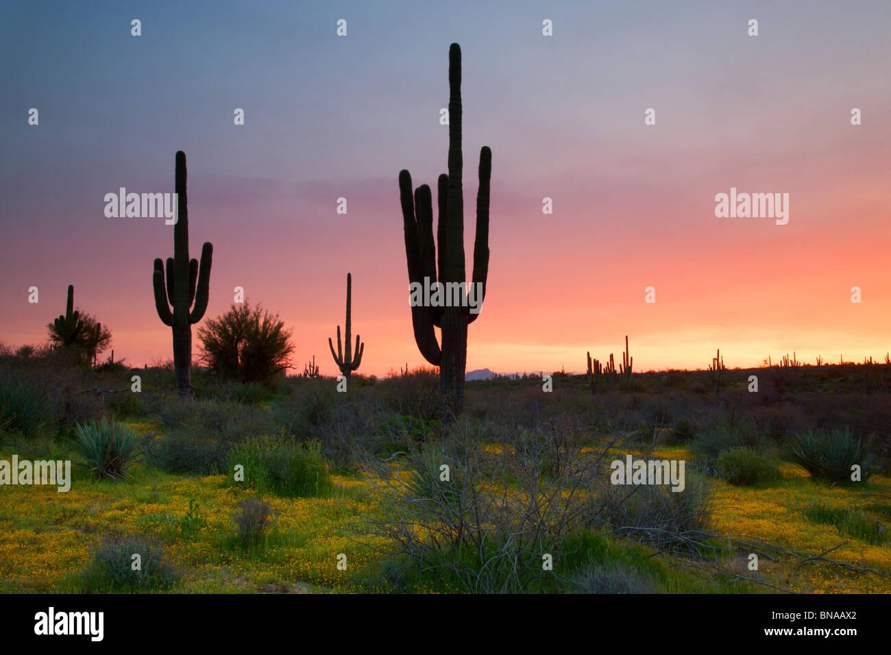 Tonto National Forest, à l'Est de Phoenix, Arizona. Photo Stock