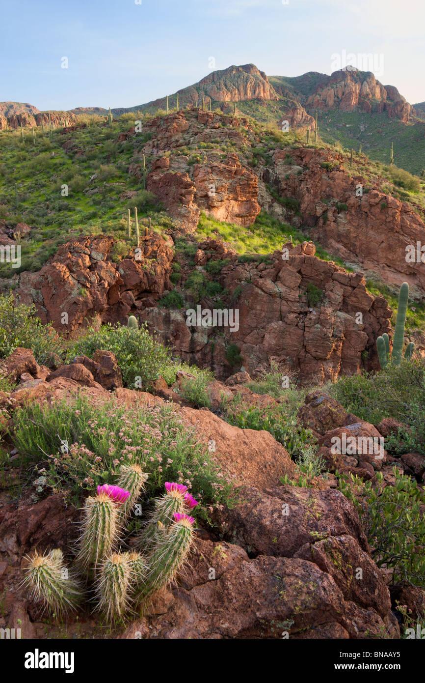 La superstition des montagnes le long de l'Apache Trail, Tonto National Forest, à l'Est de Phoenix, Photo Stock