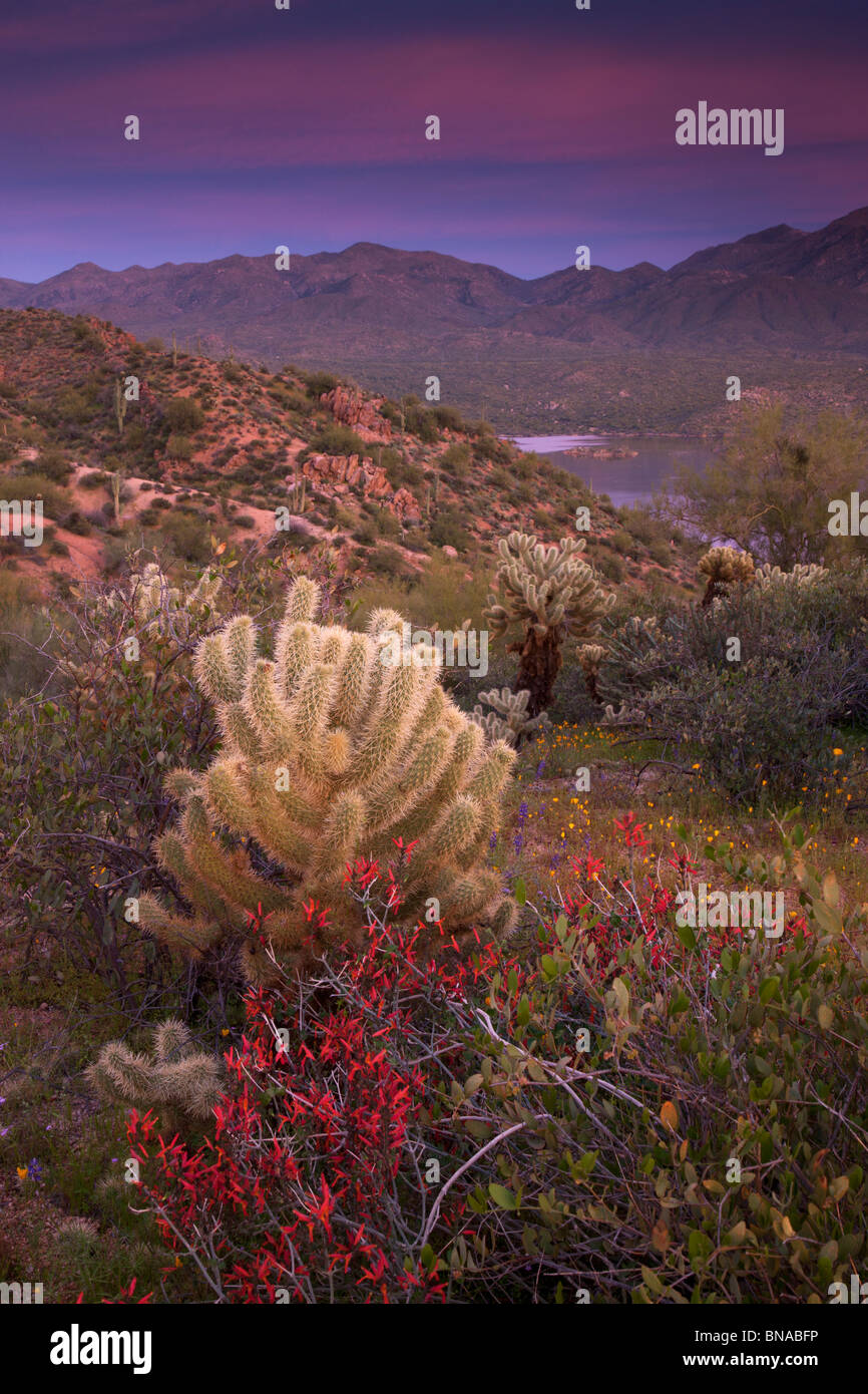 Les fleurs sauvages le long du lac Bartlett, forêt nationale de Tonto, près de Phoenix, Arizona. Photo Stock