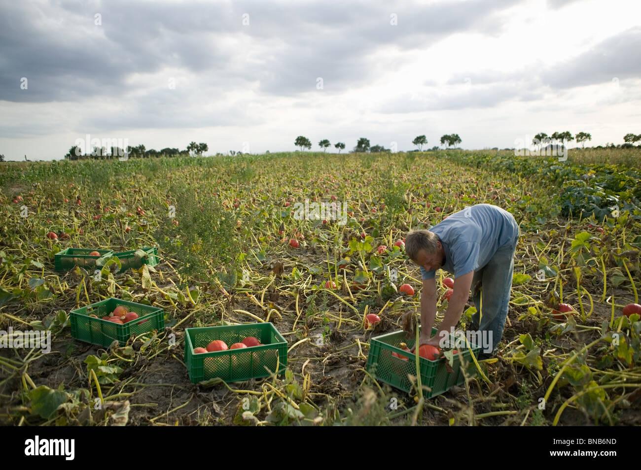 Agriculture biologique Photo Stock