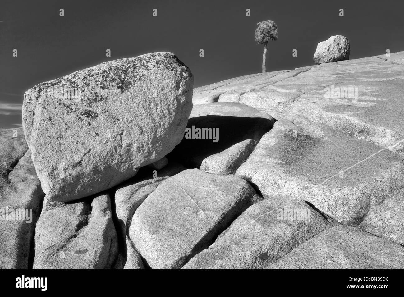 Roche de granit et Lone Tree. Yosemite National Park, Californie Banque D'Images