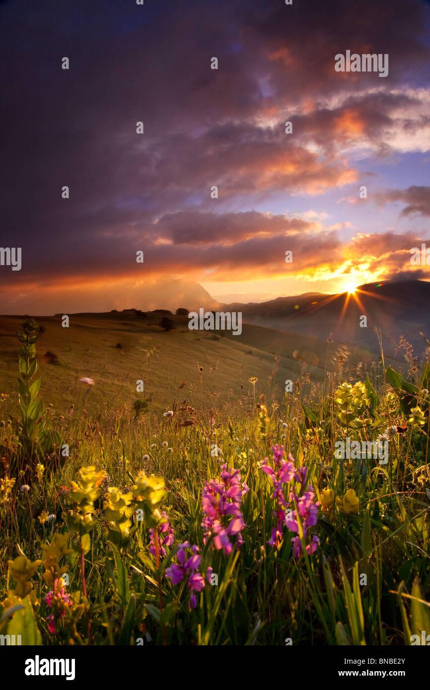 Fleurs sauvages au lever du soleil dans le parc national des Monts Sibyllins, Ombrie Italie Photo Stock
