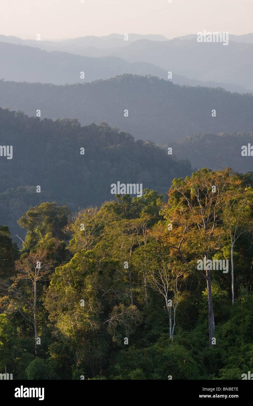 Collines couvertes de forêt tropicale, parc national de Kaeng Krachan, Thaïlande Photo Stock