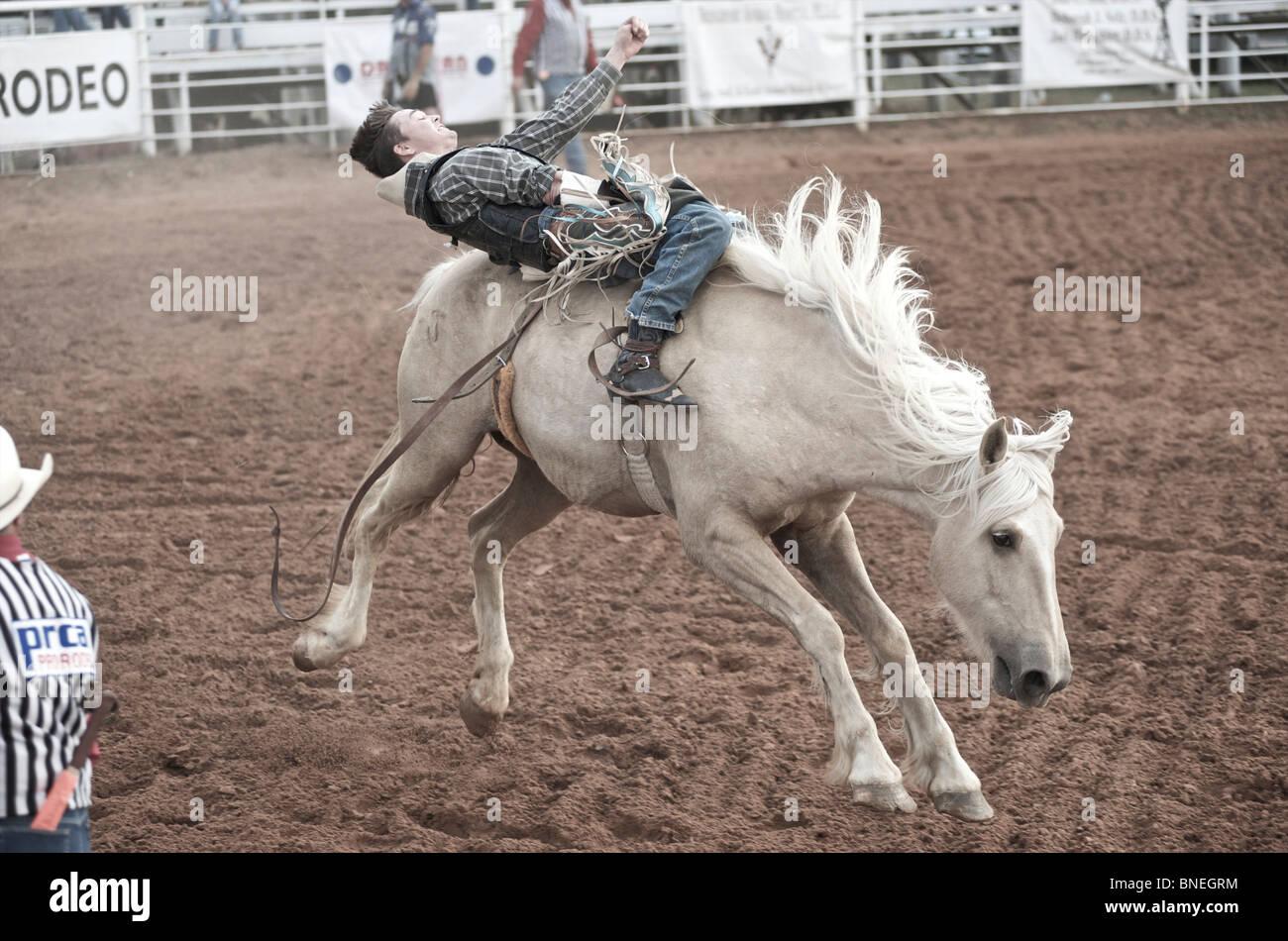 Lancer cheval Rodeo Cowboy Membre de l'érythroblastopénie à partir de son retour à Petite-ville Bridgeport, Texas, États-Unis Banque D'Images