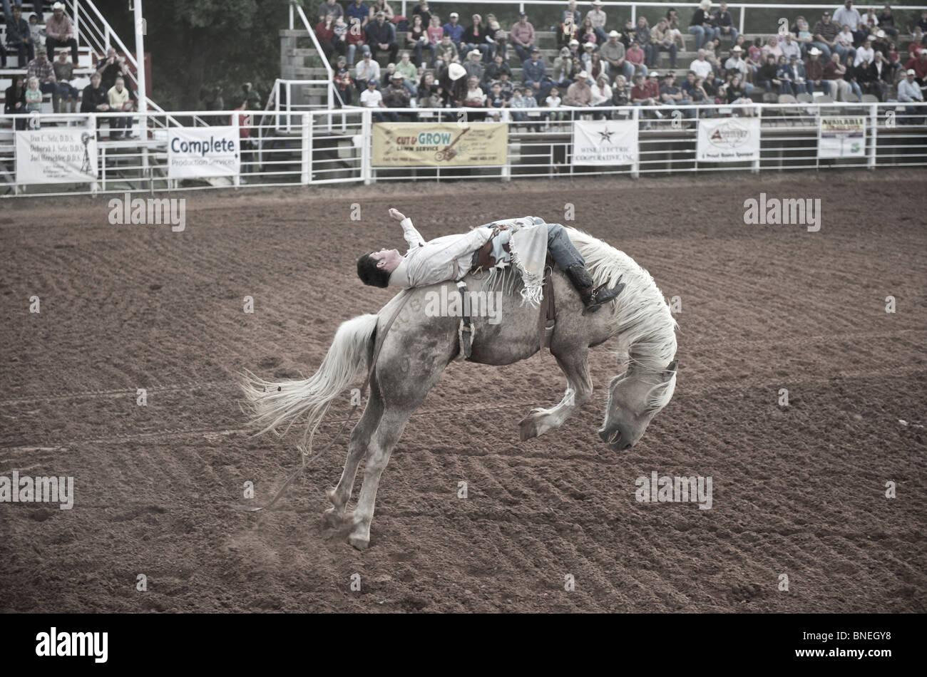 L'essayant de jeter Rodeo Cowboy membre de l'érythroblastopénie à partir de son retour à Petite-ville Bridgeport, Texas, États-Unis Banque D'Images