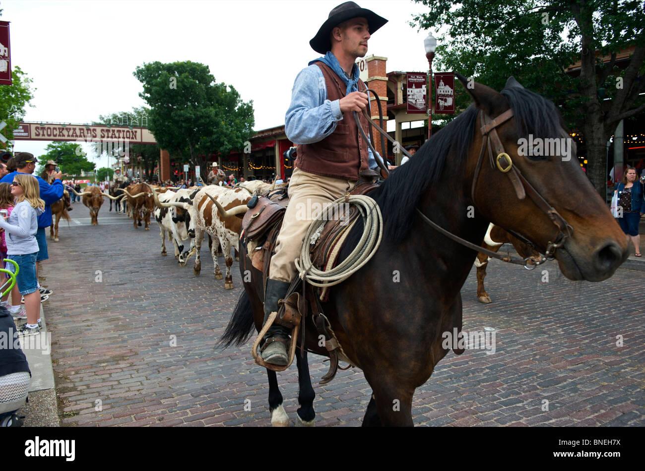 Longhorns et cowboy en marchant dans la rue au Texas Banque D'Images