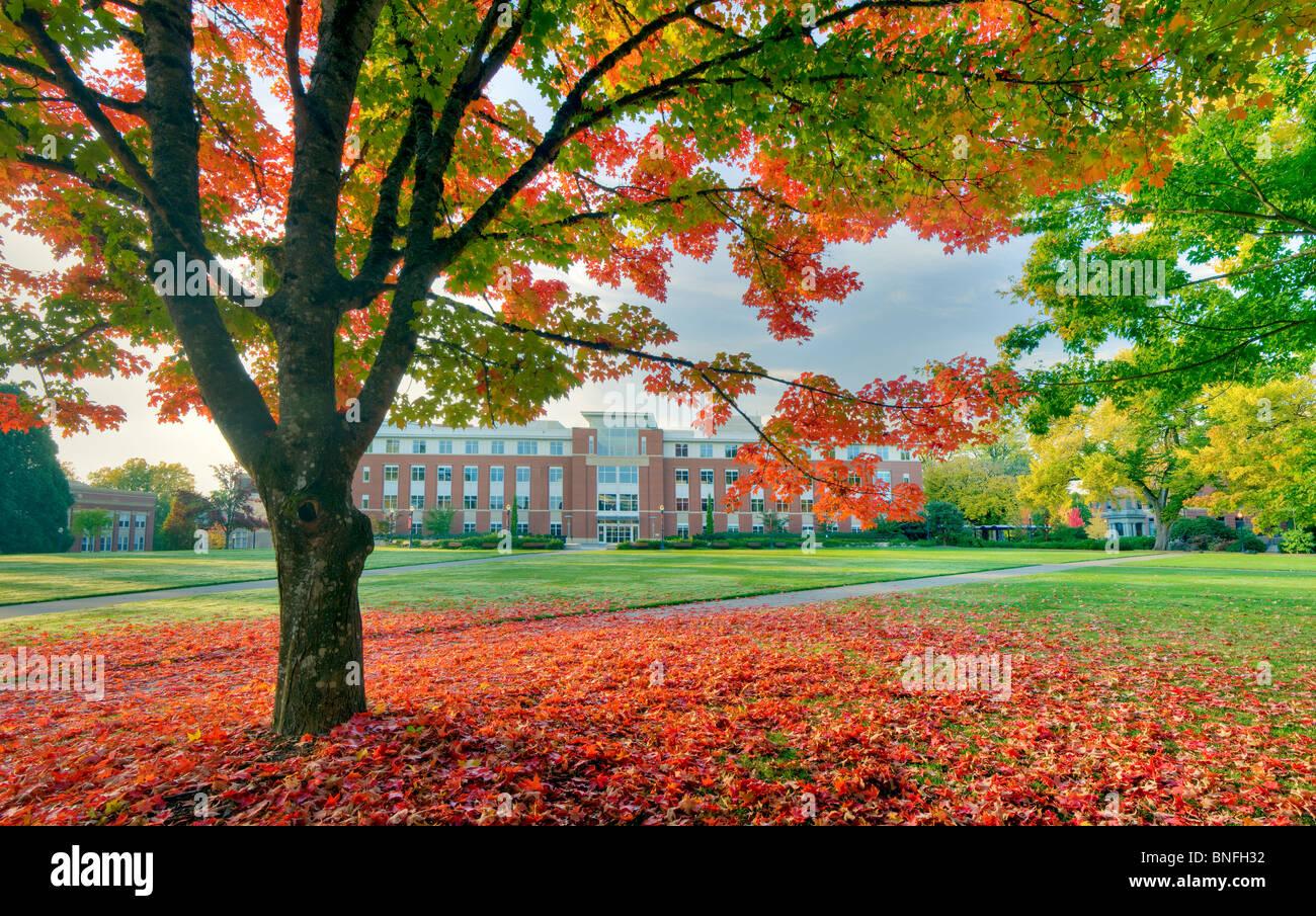 La vallée Bibliothèque et quad avec la couleur de l'automne. L'Université de l'Oregon. Photo Stock