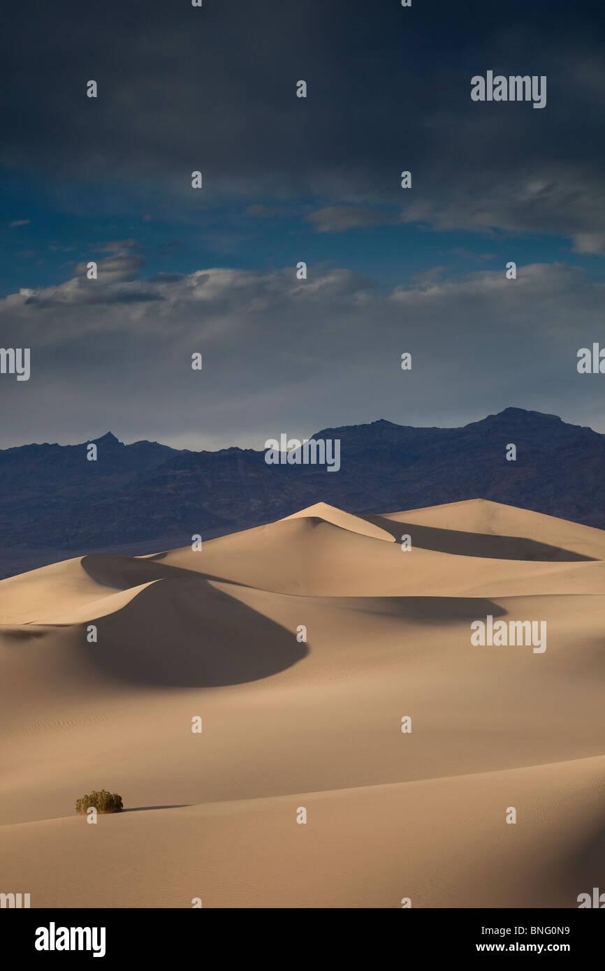 Mesquite dunes près de Stovepipe Wells Death Valley CA USA Banque D'Images