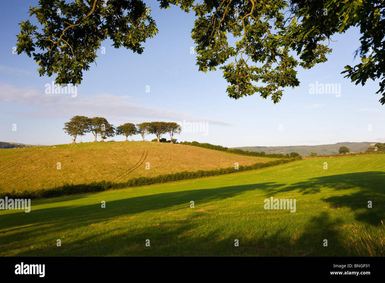 Scènes d'été campagne Exmoor entre les villages de Horner et Luccombe, Parc National d'Exmoor, Photo Stock