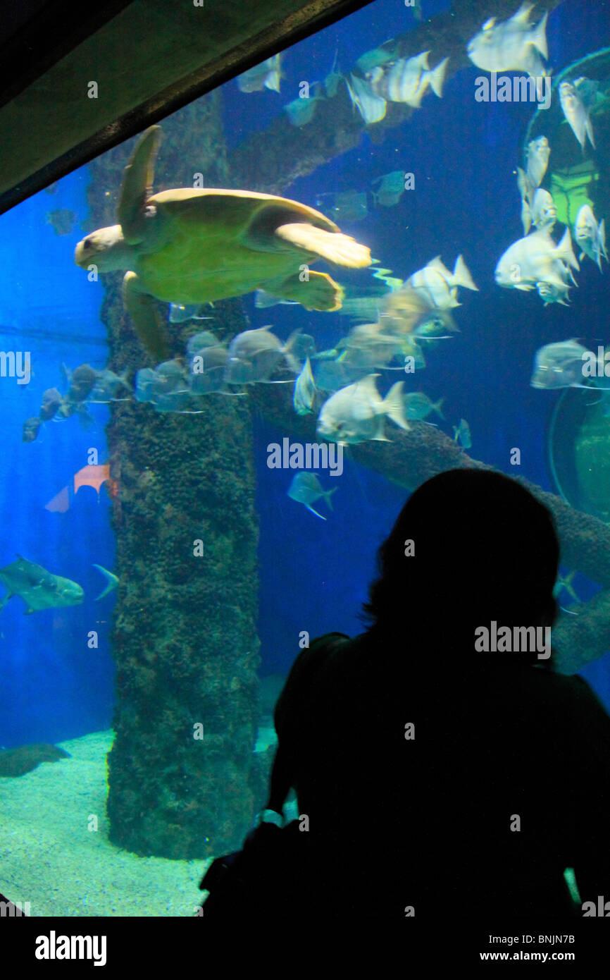 L'Aquarium de Norfolk Canyon à Virginia Aquarium and Marine Science Center, Virginia Beach, Virginia, USA Photo Stock