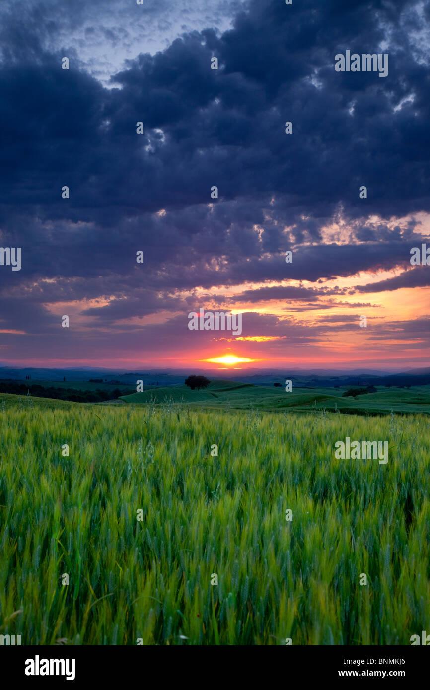 Coucher de soleil sur champ de blé près de Pienza, Toscane Italie Photo Stock