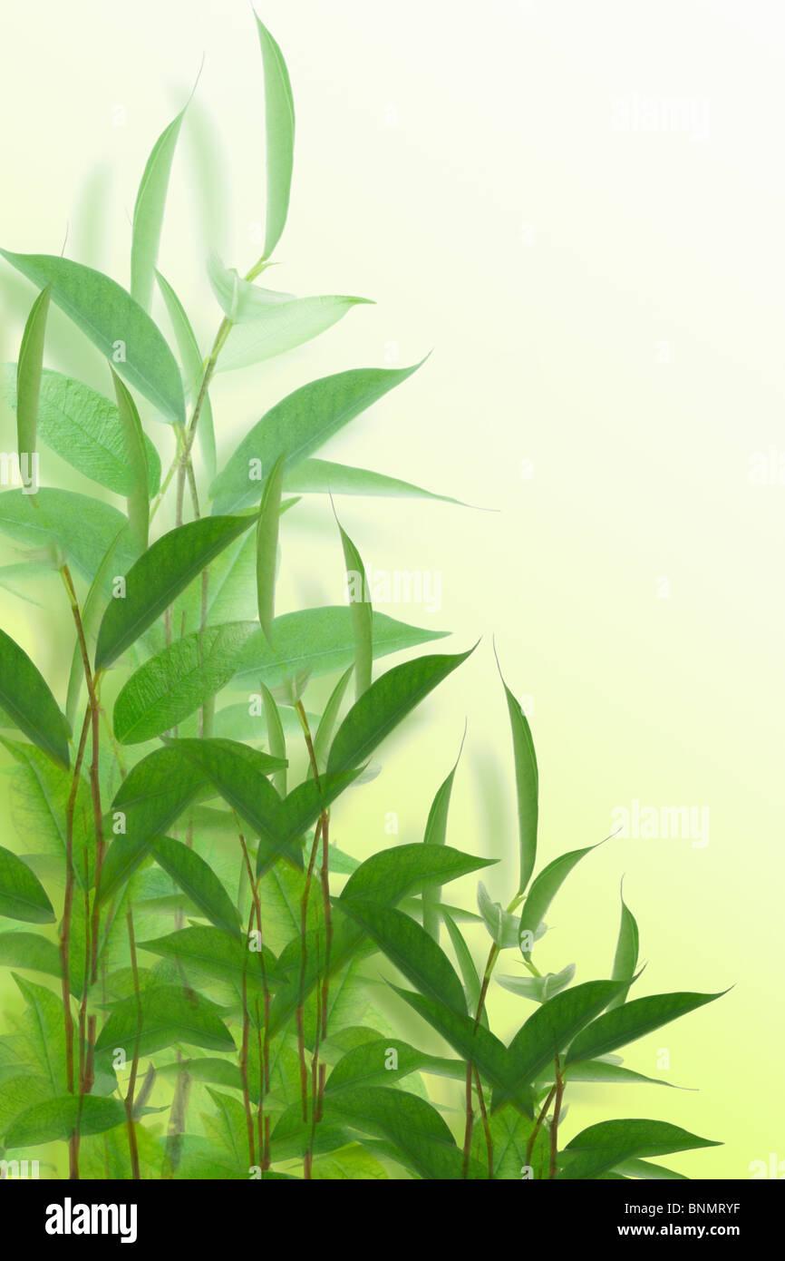 Les jeunes plantes vertes sur fond blanc Photo Stock