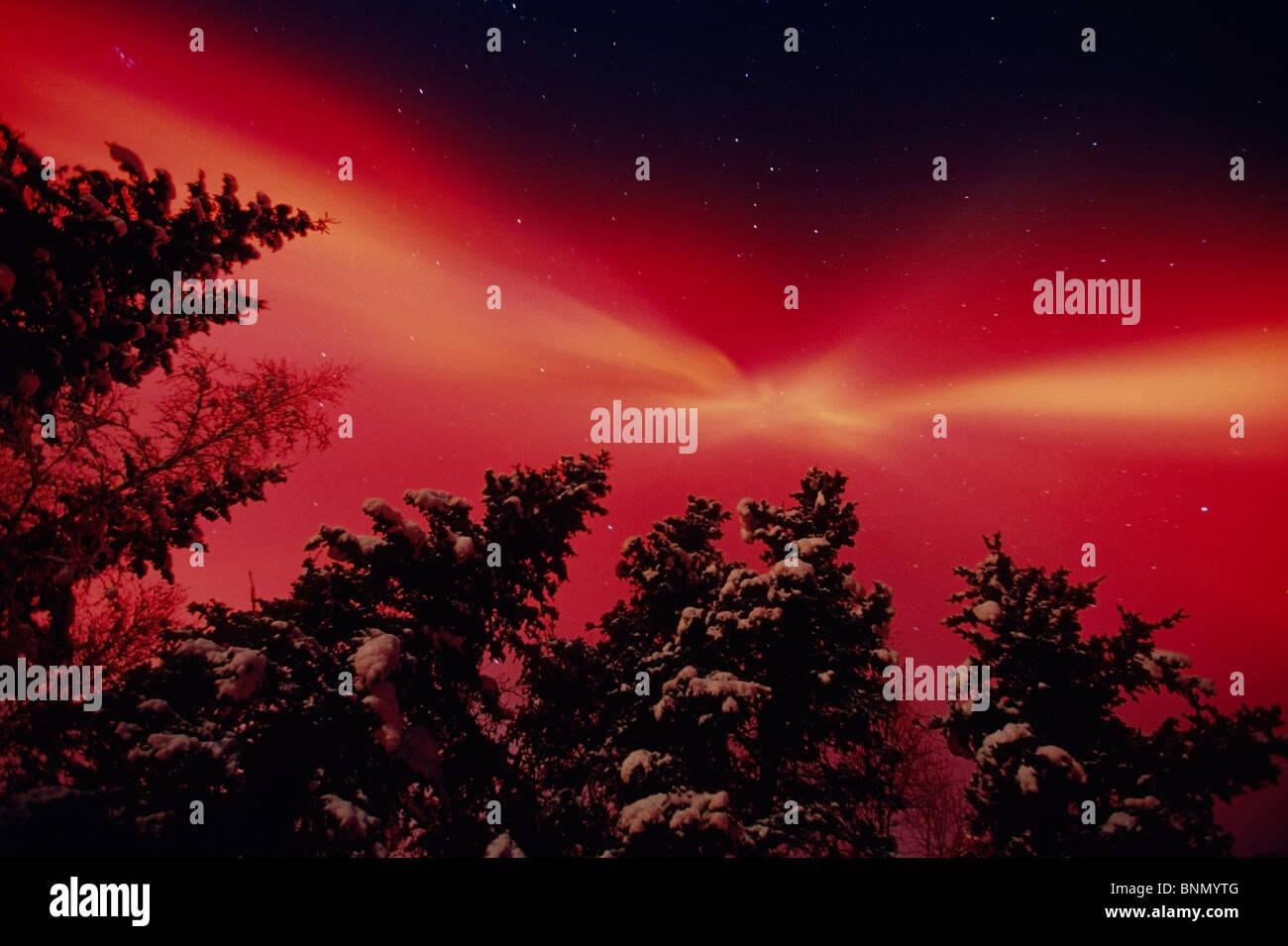 Aurore rouge intense et les Épinettes Matanuska Valley AK Photo Stock