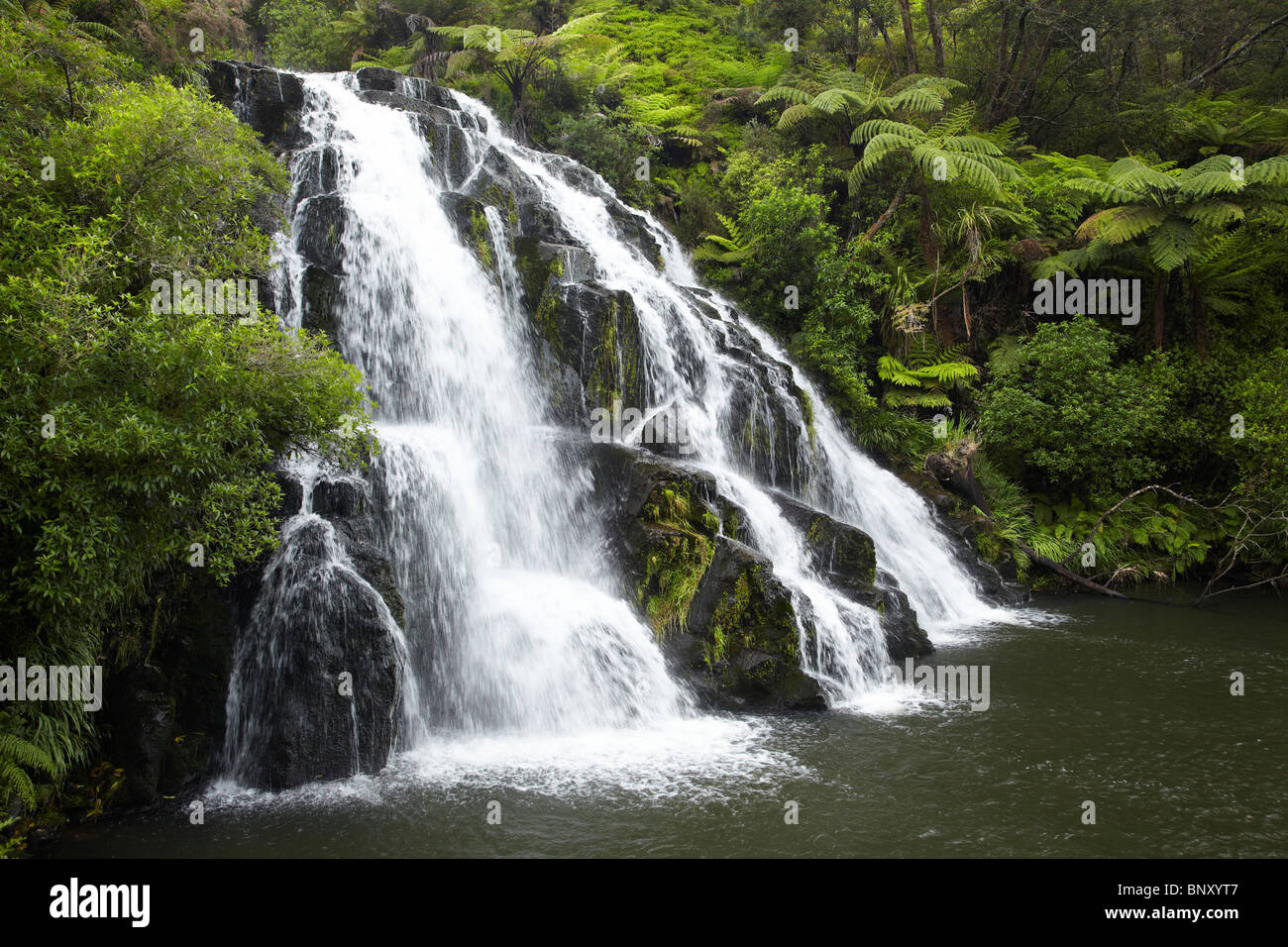 Owharoa Karangahake gorges, chutes, près de Paeroa, Waikato, Nouvelle-Zélande, île du Nord Photo Stock