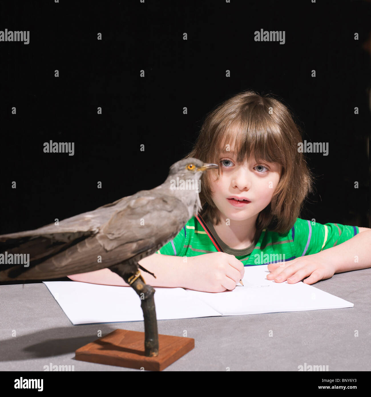 Boy drawing un oiseau Banque D'Images