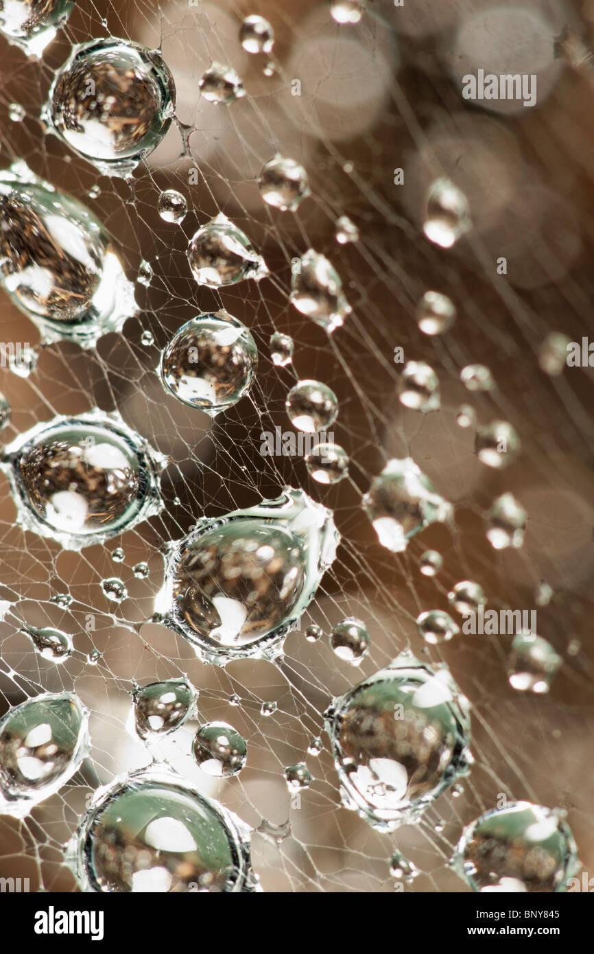 Les gouttelettes d'eau sur les araignées web. Photo Stock
