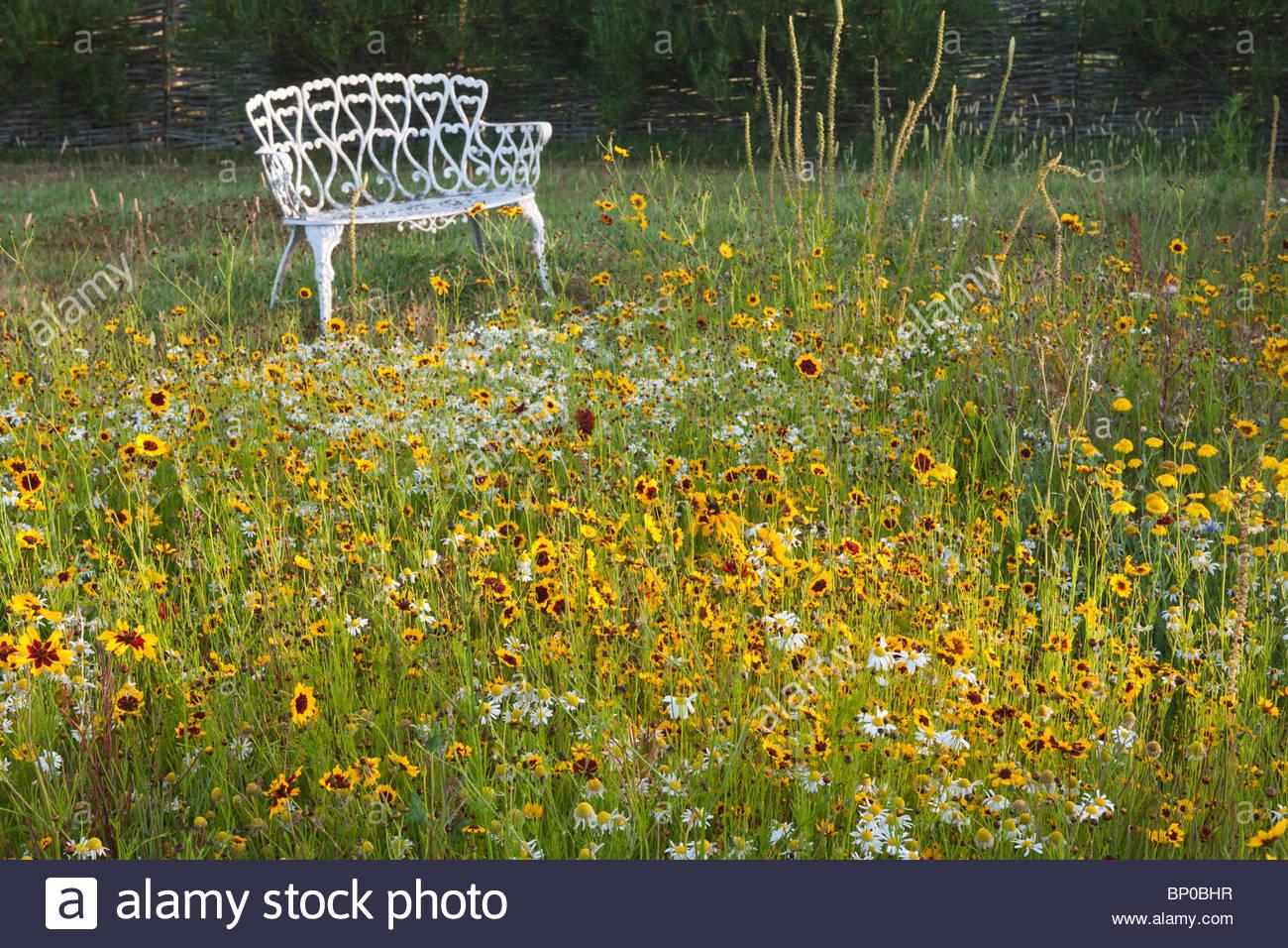 Pré pictural mix annuel jaune couleur chaud mélange marmalde Escscholzia pavot californien oeil noir Eyed Photo Stock