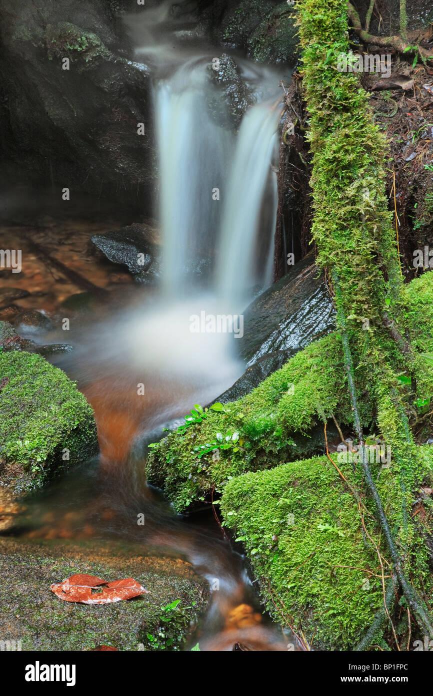Vue rapprochée de petite cascade dans la forêt montagnarde avec des roches couvertes de mousse verte. Banque D'Images