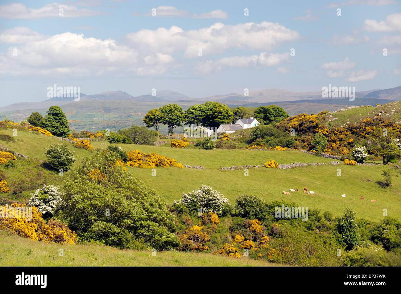 Les terres agricoles entre montagne et Camlough Newry, sur l'anneau de Gullion, County Armagh, en Irlande du Photo Stock