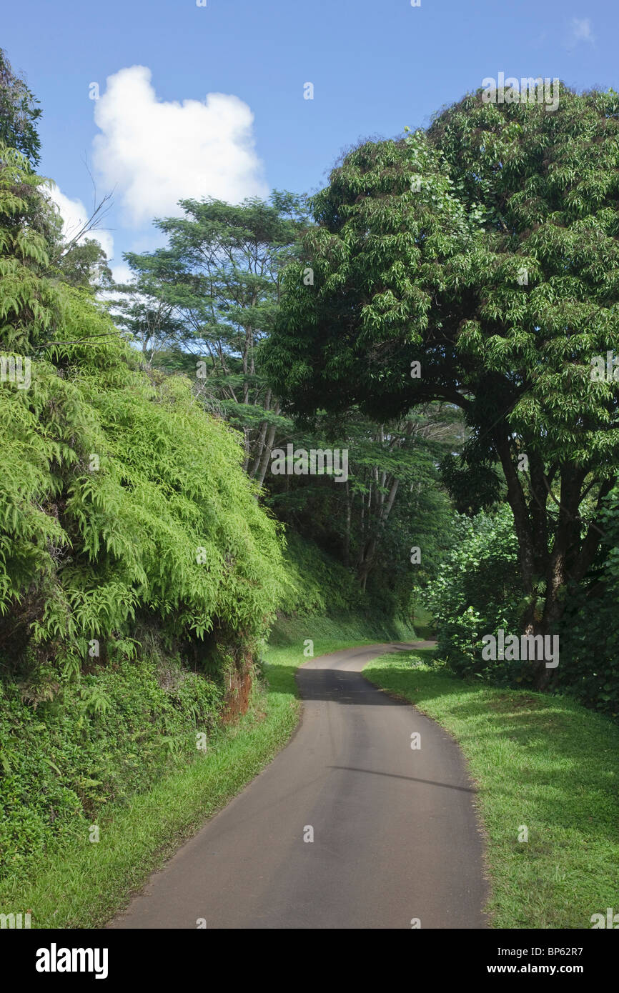Kauai, Hawaii, United States of America ; une voie de la route sinueuse traverse des paysages forestiers Photo Stock