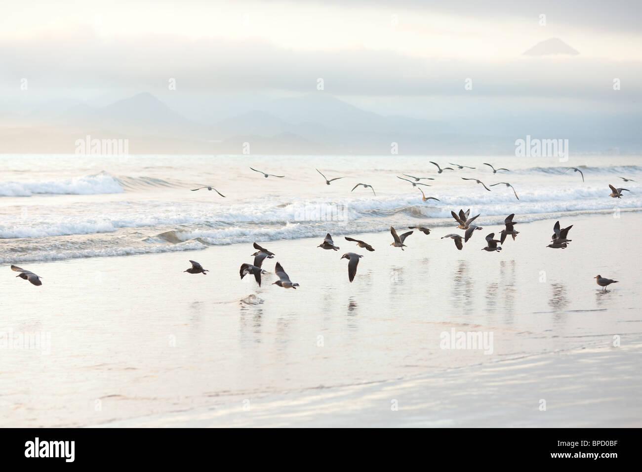 Troupeau de mouettes sur la plage Photo Stock