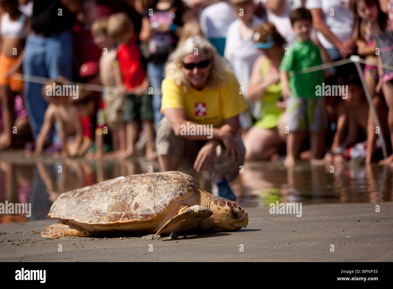 Remis en état une tortue publié retour à l'océan par l'équipe de sauvetage des tortues sur l'île de Palms, SC Banque D'Images