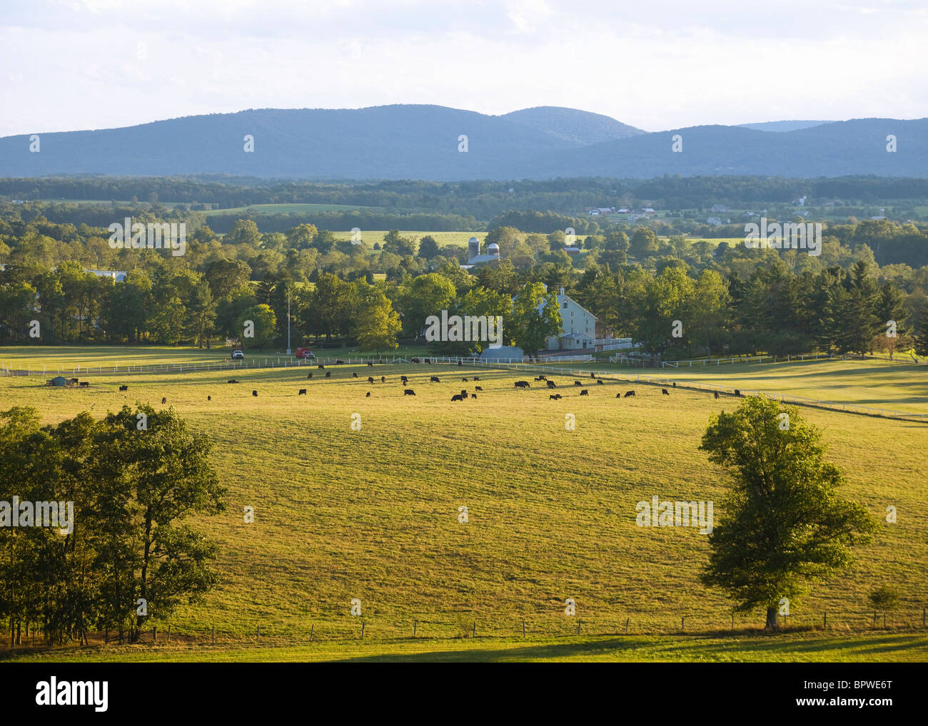 Ferme américaine et de bovins en fin d'après-midi - New York, USA Photo Stock