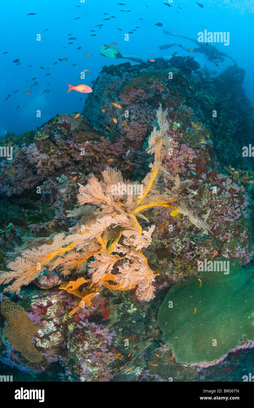 À la Plongée Similan Underwater Park, la Thaïlande, l'Asie du Sud-Est Photo Stock