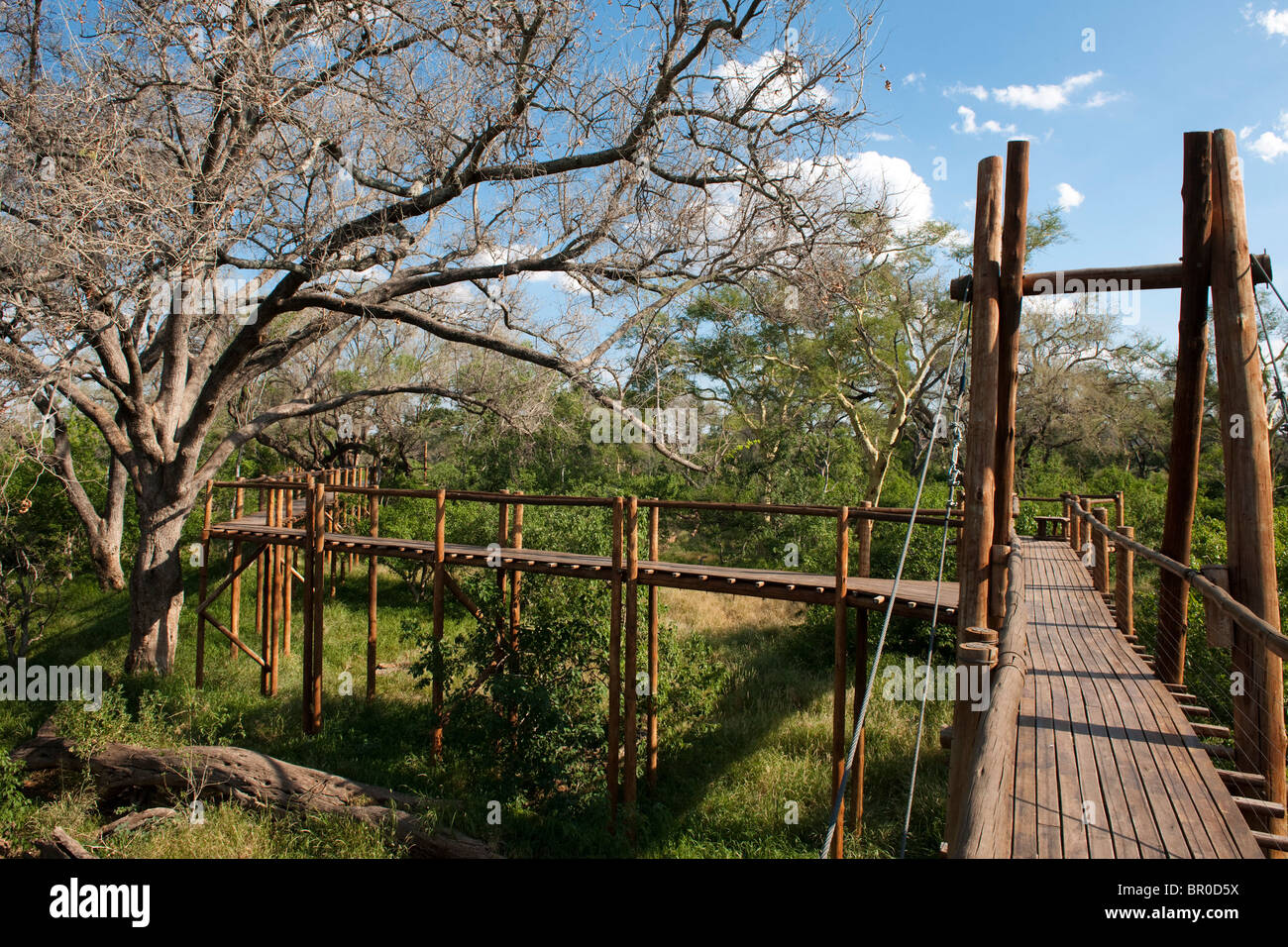 Treetop walk, le Parc National de Mapungubwe, Afrique du Sud Photo Stock