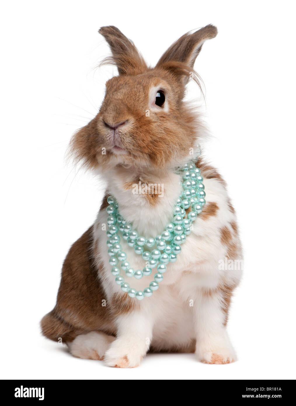 Portrait d'un lapin européen portant des colliers de perles, Oryctolagus cuniculus, in front of white background Photo Stock