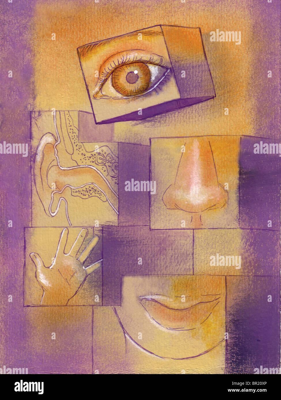 Blocs avec des illustrations sur les cinq sens sur eux Photo Stock