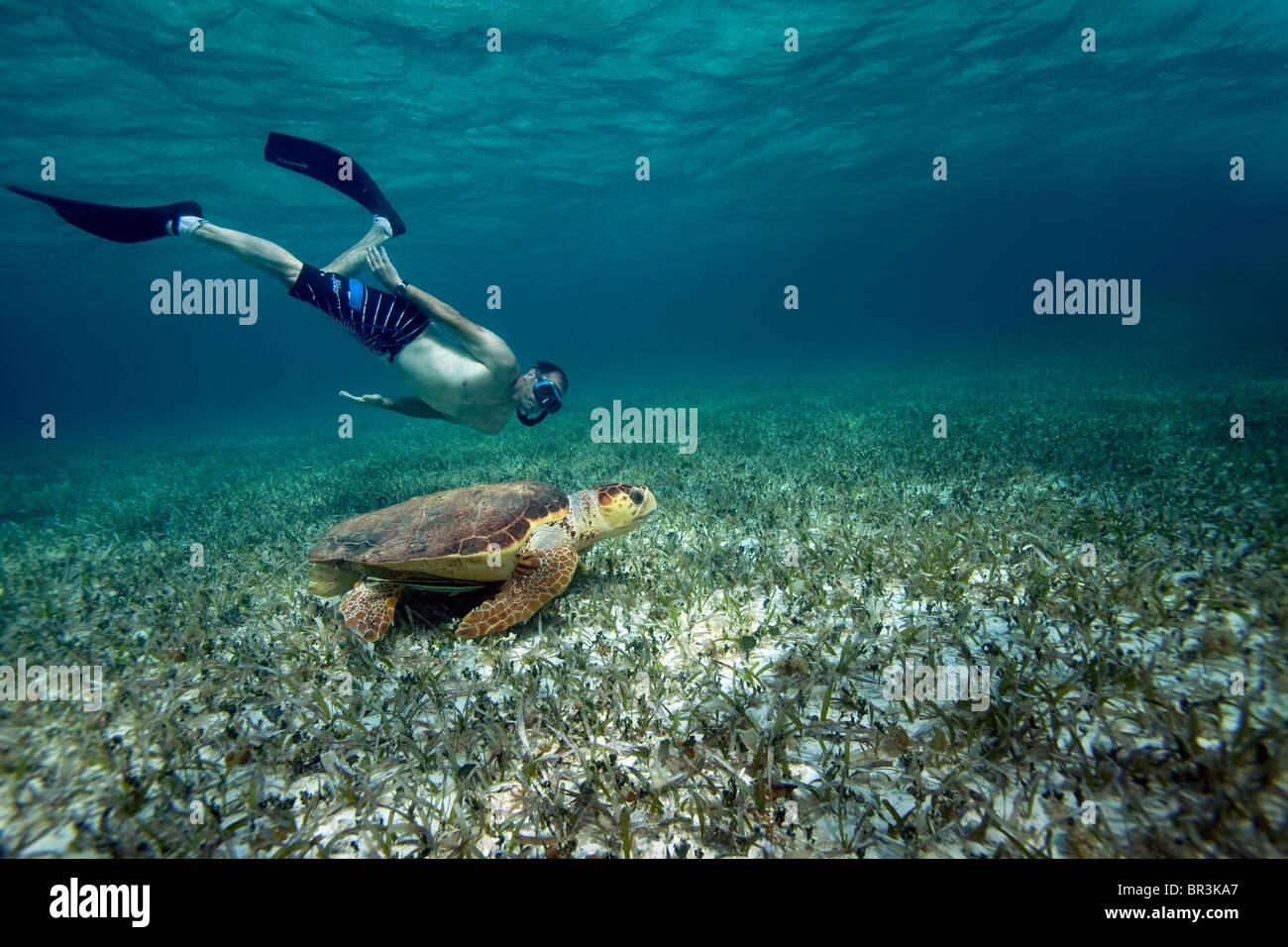 L'inspection plongeur Tortue Photo Stock