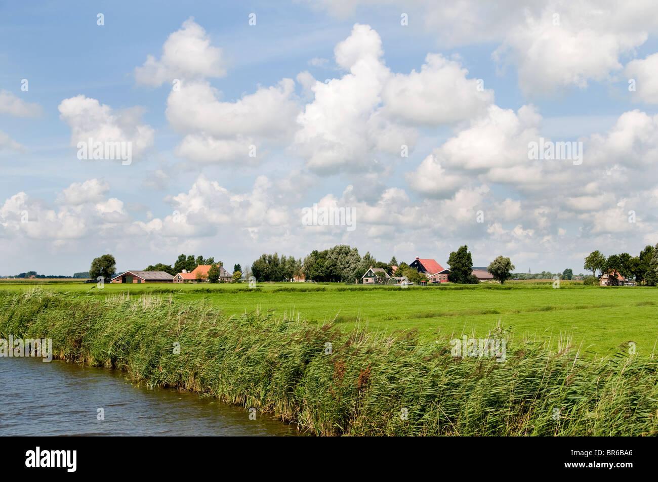 Pays-bas Friesland farm house Agriculteur Agriculture Photo Stock