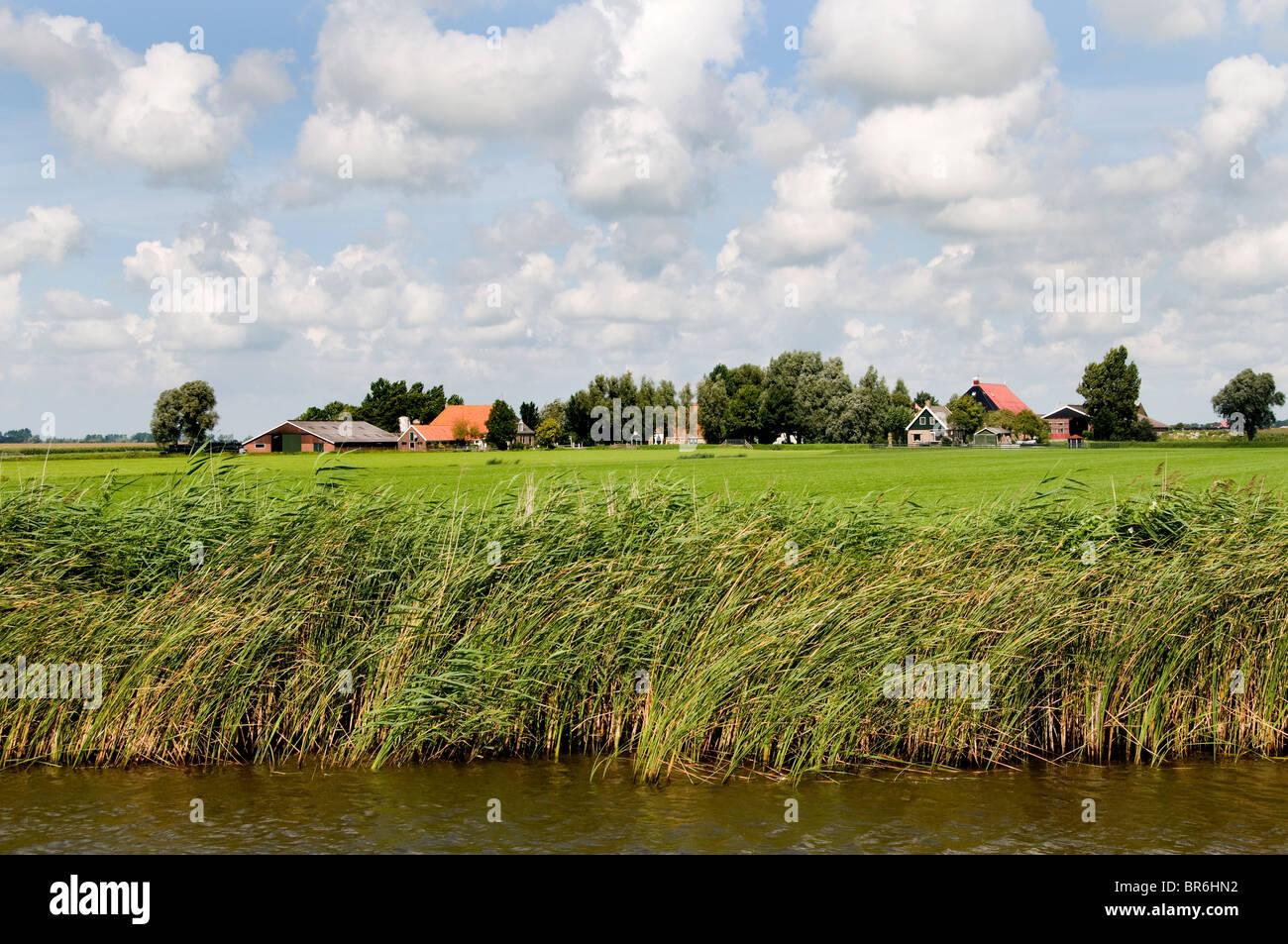 Maison de ferme agriculteur agriculture frise Pays-Bas Photo Stock