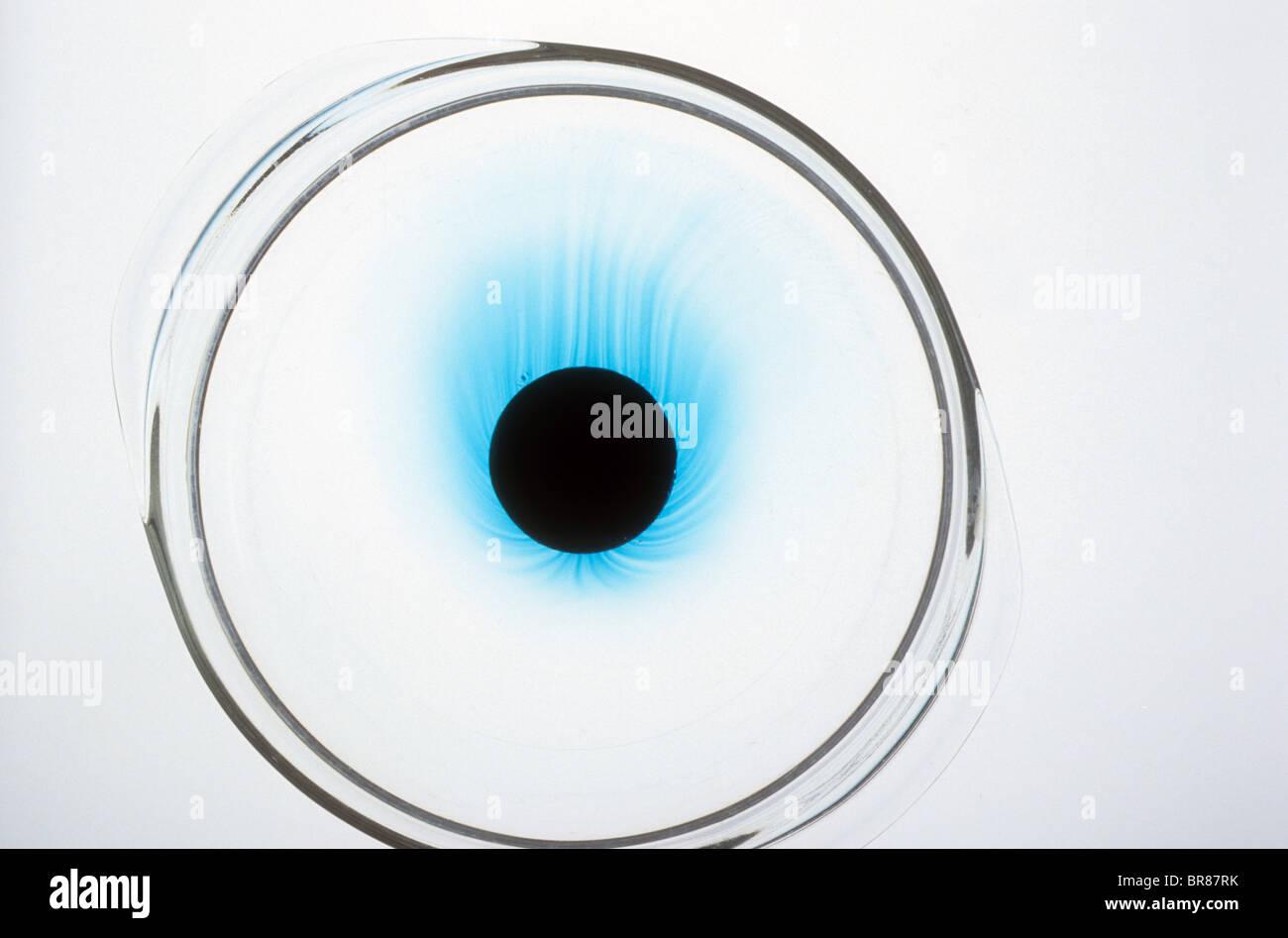 Disque colorant dissoudre dissiper pétri de l'eau de fonte pour cent fois couleur quantité disperser Photo Stock